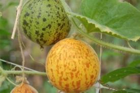 Meloenen en zo