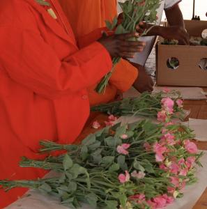 Lathyrus species and cultivars
